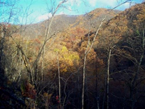Lone Oak Trail